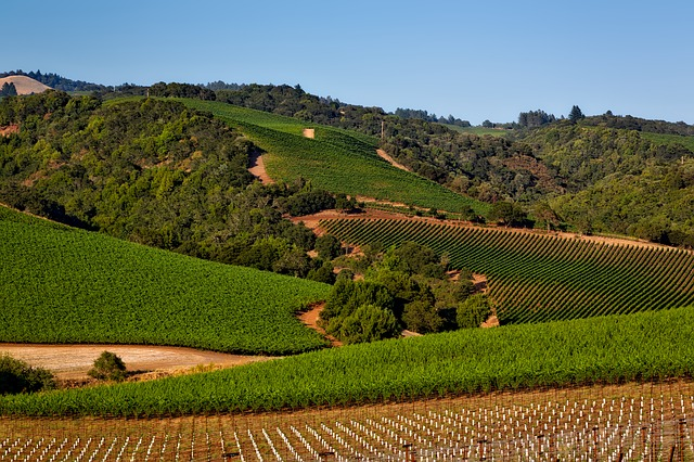 vineyard-1597724_640