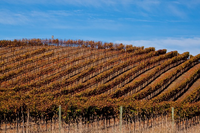vineyard-in-sonoma-1660176_640