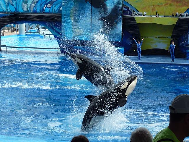killer-whale-113527_640