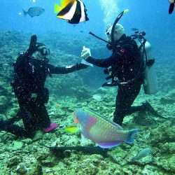 Top 10 of the World's Best Dive Sites