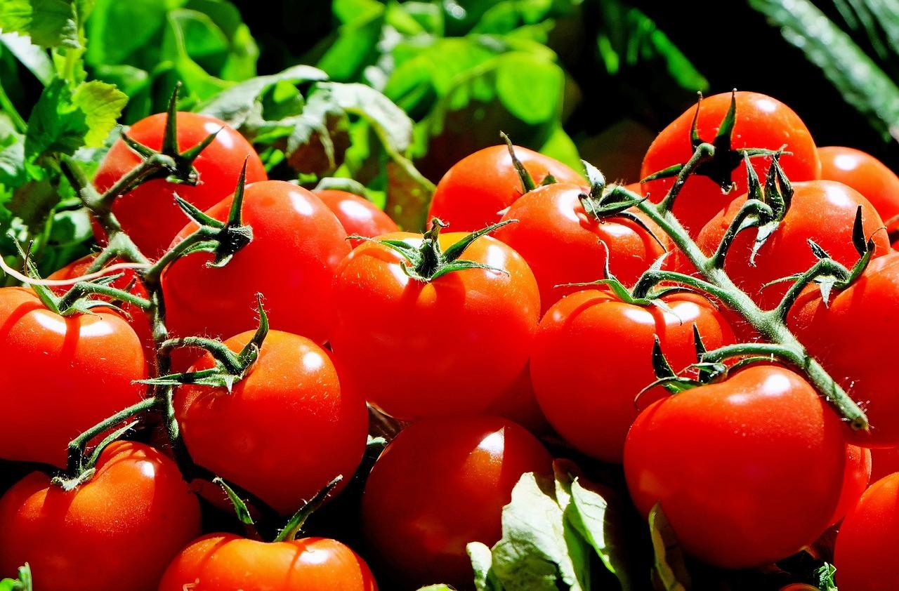 The La Tomatina Festival